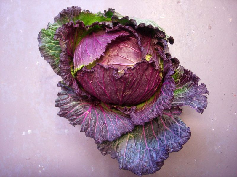 Lovely cabbage